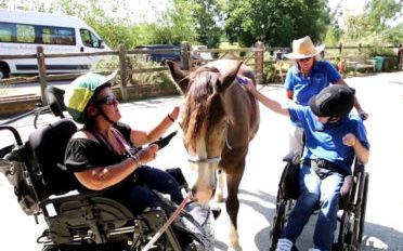 New Pony for a Disabled Riding Group